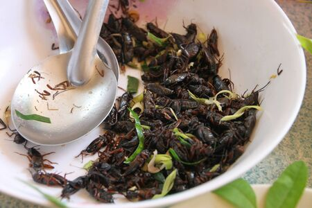 Steamed crickets