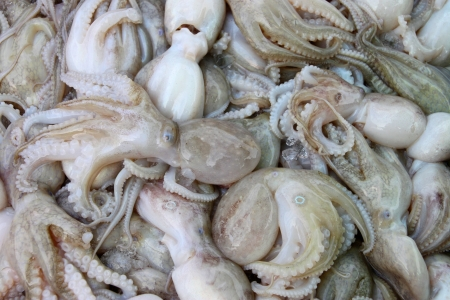 Pile of squids in local seafood market