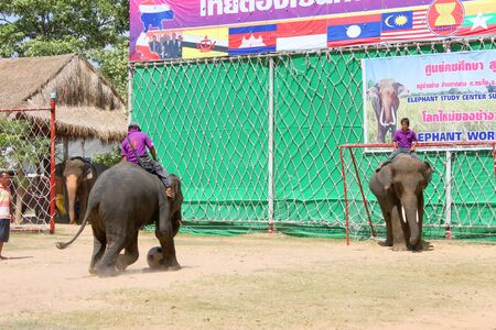 THA TUM, SURIN, THAILAND - OCTOBER 28 : Unidentified mahouts are controlling elephants to play football in elephants show on October 28, 2012 at elephant study center, Ban Ta Klang, Tha Tum, Surin, Thailand. Stock Photo - 16206017