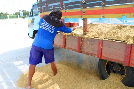 dankness: MUANG, MAHASARAKHAM - NOVEMBER 14 : Unidentified farmers are bringing ton of paddy to sell in rice commercial public project on November 14, 2012 at Agricultural Cooperative, Muang, Mahasarakham, Thailand.
