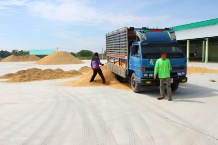 dankness: MUANG, MAHASARAKHAM - NOVEMBER 16 : Unidentified farmers are bringing ton of paddy to sell in rice commercial public project on November 16, 2012 at Agricultural Cooperative, Muang, Mahasarakham, Thailand.
