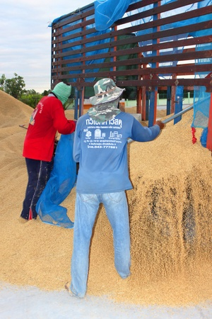public project: MUANG, MAHASARAKHAM - NOVEMBER 19 : Unidentified farmers are bringing ton of paddy to sell in rice commercial public project on November 19, 2012 at Agricultural Cooperative, Muang, Mahasarakham, Thailand. Editorial