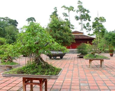 viet nam: Bonsai garden at Thien Mu Pagoda, Hue, Central Vietnam.