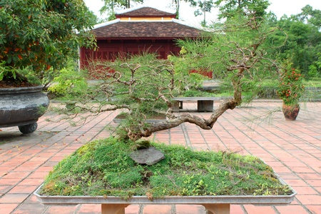 Bonsai garden at Thien Mu Pagoda, Hue, Central Vietnam. photo