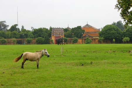Grass field in Dai Noi Palace on DECEMBER 8, 2012 at Hue, Central Vietnam. Dai Noi Palace may be called The Imperial Enclosure/The Citadel Palace or The Purple Forbidden City in Hue City of Viet Nam. Stock Photo - 16869789