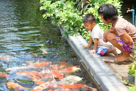 MUANG, BURIRAM - APRIL 8 : Unidentified children are looking at fishes in local aquarium garden park on April 8, 2012 at Muang, Buriram, Thailand. Stock Photo - 17063359