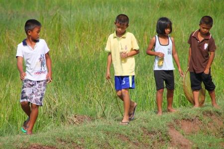 PAYAKKAPHUMPHISAI, MAHASARAKHAM - JULY 7 : Unidentified children are playing and seeking little fishes from rural field on July 7, 2012 at Payakkaphumphisai, Mahasarakham, Thailand. Stock Photo - 17063357