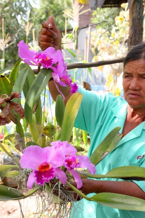 MUANG, MAHASARAKHAM - JANUARY 12 : Unidentified woman is showing beautiful orchid to tourist on January 12, 2012 at local garden in Wang Mai, Muang, Mahasarakham, Thailand. Stock Photo - 17063345