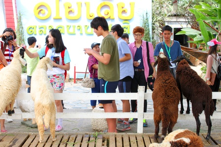 AYUTTHAYA, THAILAND - JANUARY 6 : Unidentified tourists are feeding sheeps in Ayothaya Floating Market on January 6, 2013 at Ayutthaya, Thailand.