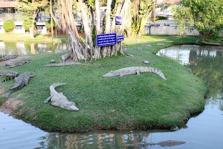 Crocodiles farm in Bung Chawak on January 5, 2013 at Doem Bang Nang Buat, Suphan Buri, Thailand.  Stock Photo - 17378280