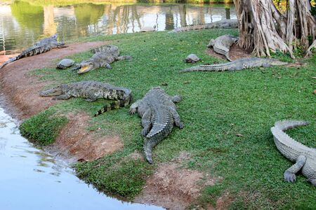 Crocodiles and turtles in farm Stock Photo - 17348695