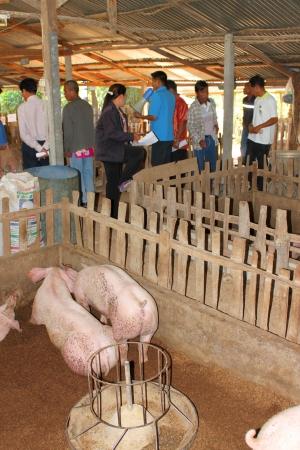 WAPIPATUM, MAHASARAKHAM - DECEMBER 26 : Unidentified tourists are field visiting economic self-sufficiency village on December 26, 2012 at Nong Pheuak village, Wapipatum, Mahasarakham. Stock Photo - 17392871