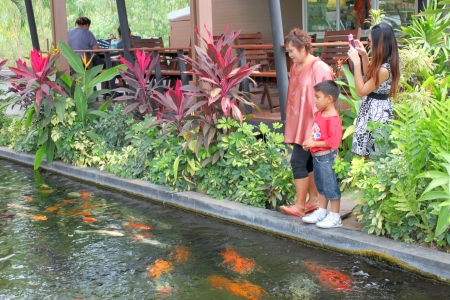 MUANG, BURIRAM - JANUARY 26 : Unidentified tourists are looking at fishes in local aquarium garden park on January 26, 2013 at Muang, Buriram, Thailand. Stock Photo - 17950152