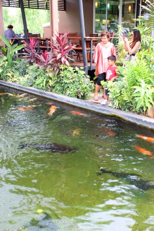 MUANG, BURIRAM - JANUARY 26 : Unidentified tourists are looking at fishes in local aquarium garden park on January 26, 2013 at Muang, Buriram, Thailand. Stock Photo - 17950153