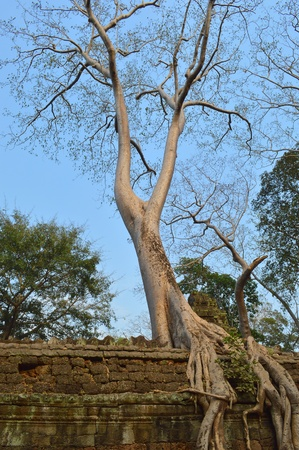 handscraft: Tree on wall of classical Khmer construction at Prasat Ta Prohm