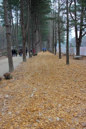 Winter garden and walkway on November 26, 2011 at Nami island, Naminara Republic, Korea.