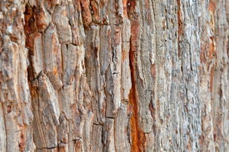 Holz rinde zaun wand hintergrund lizenzfreie fotos, bilder und ...