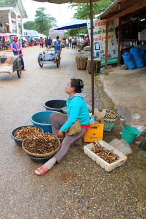 VANG TAO, LAO P D R  - JULY 28   Unidentified woman is selling fresh mushrooms at Thai - Lao border business center on July 28, 2013 in Vang Tao, Lao P D R