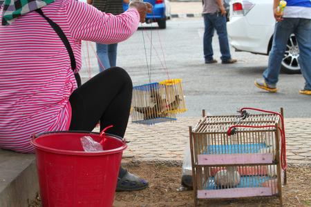 involves: ROI-ET - DECEMBER 15   Unidentified woman is selling birds at city park on December 15, 2013 in Roi-Et, Thailand  A common merit making ritual in Thailand involves setting captured birds free