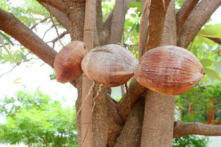 apocrita: wasp made of coconuts for home outdoor decoration