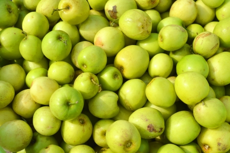 ber: Ziziphus mauritiana - known as Ber, Chinee Apple, Jujube, Indian plum