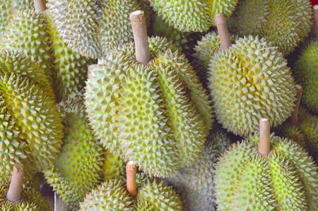 fruitful: Durians from rural farm of East of Thailand Stock Photo