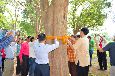 conservationist: MAHASARAKHAM - APRIL 10   people campaign for big trees and forest conservation by ordaining trees at Nong Kung Tao school on April 10, 2014 in Muang, Mahasarakham, Thailand  Editorial