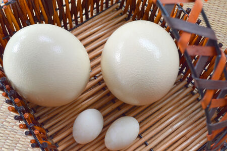 ostrich eggs and duck eggs to compare the size photo