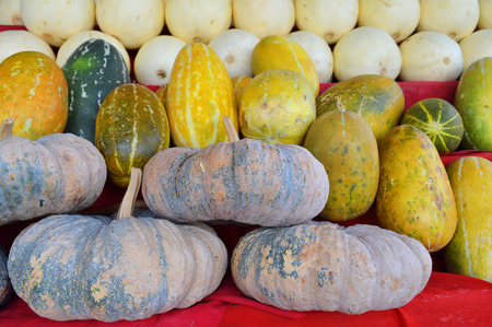 musk: musk melon, pumpkin and cantaloupe on shelves for sell
