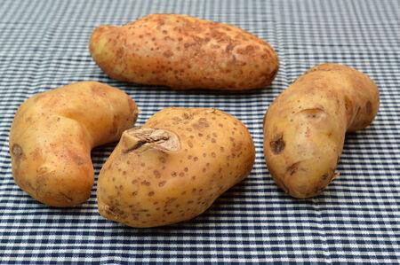 tela algodon: pila de papas org�nicas en el pa�o de algod�n