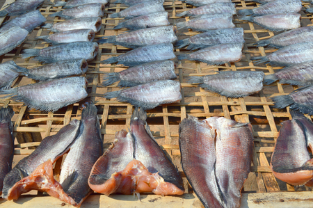 common snakehead: Trichogaster pectoralis and Striped snakehead fishes dried in the sun for sell in open market