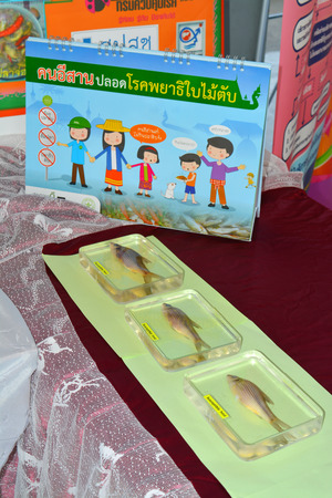 fish exhibition: MAHASARAKHAM  JUNE 20 : Instructional media of opisthorchis viverrini protection are on display in health assembly seminar at Padung Nari school on June 20 2015 in Mahasarakham Thailand.