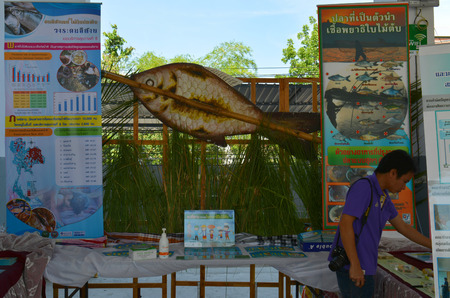 fish exhibition: MAHASARAKHAM  JUNE 20 : Spectator is looking instructional media of opisthorchis viverrini protection in health assembly seminar at Padung Nari school on June 20 2015 in Mahasarakham Thailand.