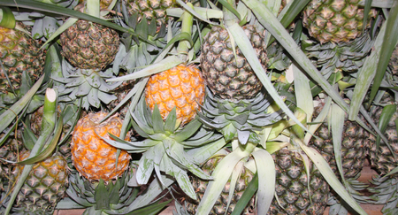 vegetative: pile of smooth cayenne pineapple fruits in market stall Stock Photo