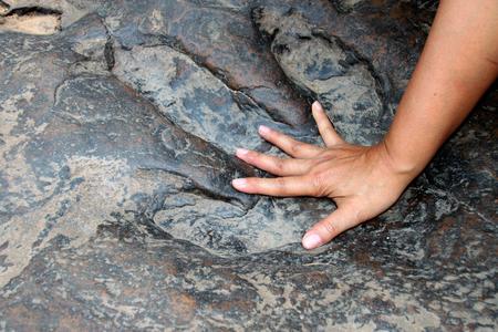 huella pie: mano humana compara con la huella de dinosaurio real en Naku, Kalasin de Tailandia