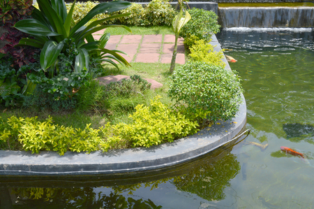 garden pond: flowering plants in tropical garden pond