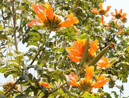 tropical garden: orange flowers in tropical garden Stock Photo