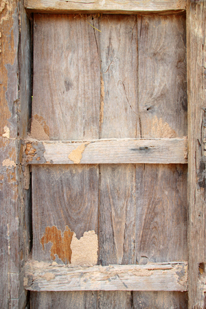 termite: Termite damage wooden wall background