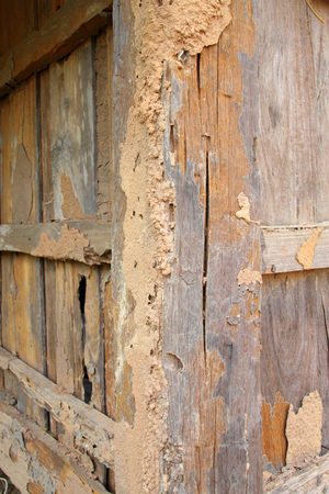 hollow wall: Termite damage home wooden wall background