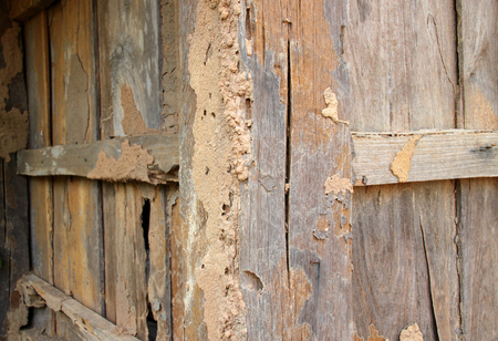 drywood: Termite damage home wooden wall background
