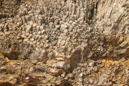 moscovian: corals fossil lublinophyllum thailandicum in middle carbon carboniferous moscovian era