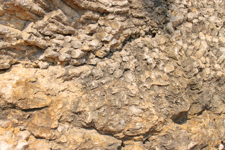 carboniferous: corals fossil lublinophyllum thailandicum in middle carbon carboniferous moscovian era