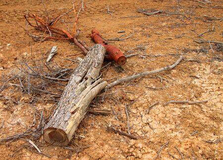 deforestacion: tronco del �rbol despu�s de la deforestaci�n se encuentra en Tailandia