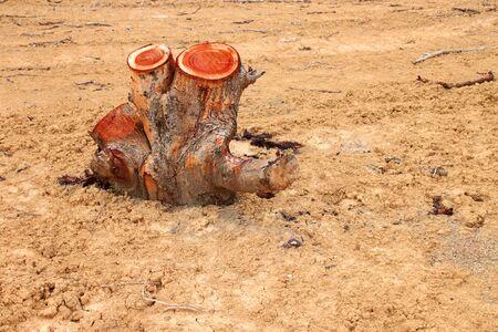deforestation: tree stump after deforestation located in Thailand Stock Photo
