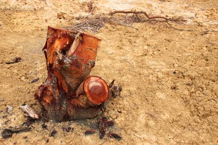 deforestacion: toc�n de �rbol despu�s de la deforestaci�n se encuentra en Tailandia