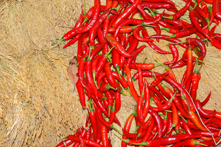 sheaf: pile of fresh chili on spike sheaf at local Thai morning market stall Stock Photo