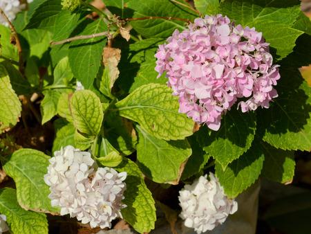 clima tropical: flores de color rosa en el clima tropical jardín casero cubo