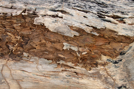 drywood: traces of termites eat on old rotten wood background