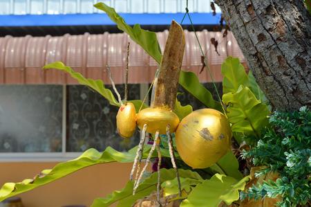 coconut mascot stock photos images royalty free coconut mascot
