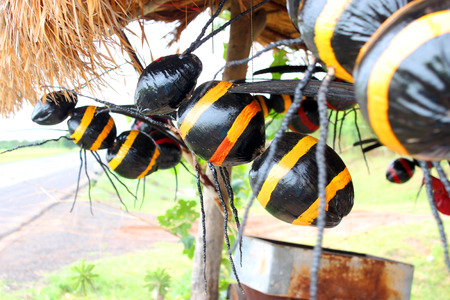 apocrita: wasps creative toy made of coconuts hung for home outdoors decoration and good luck in religious belief if wasps are living in someone home Stock Photo